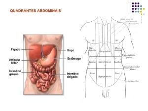 anatomia-humana-7-728